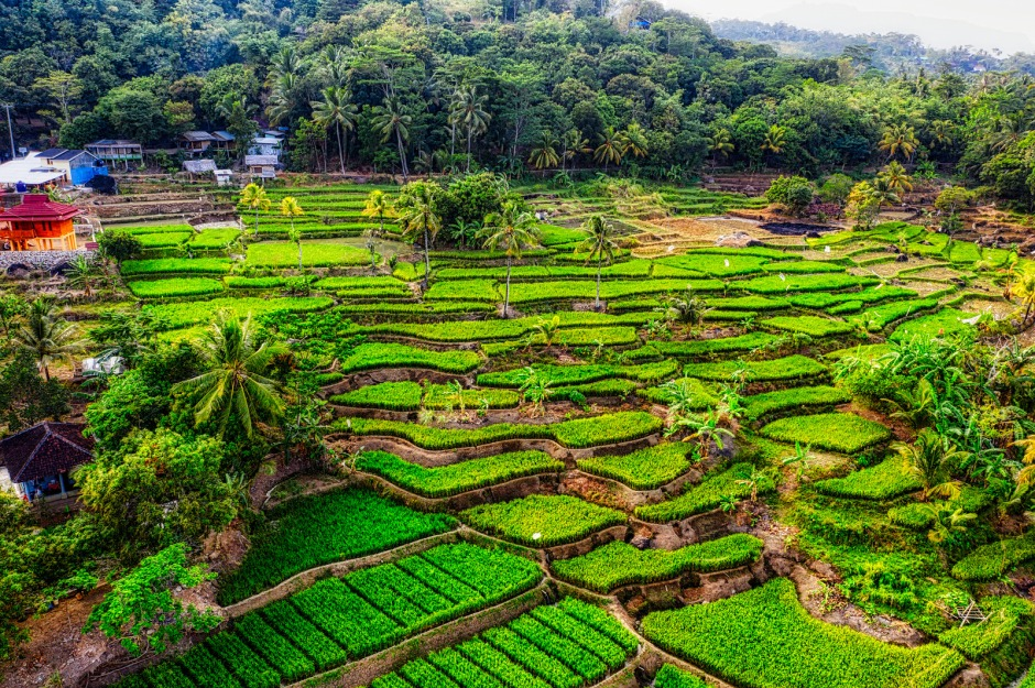 Canva - Landscape Photo of Rice Terraces
