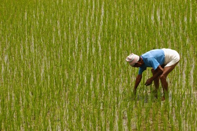 Nepali Farmers